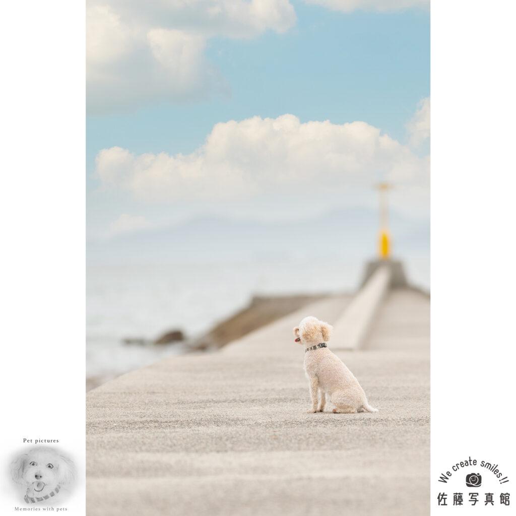 ペット わんこ 犬 ロケ撮影 早島 佐藤写真館